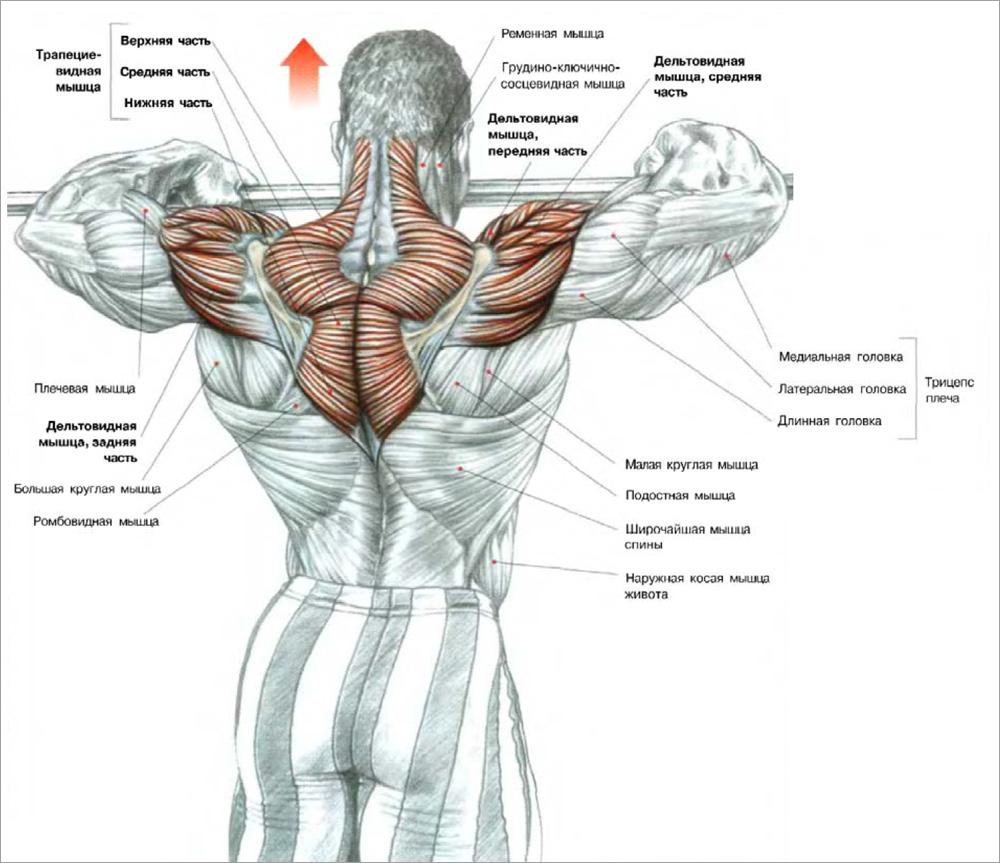 Упражнения для увеличения мышц в домашних условиях 197
