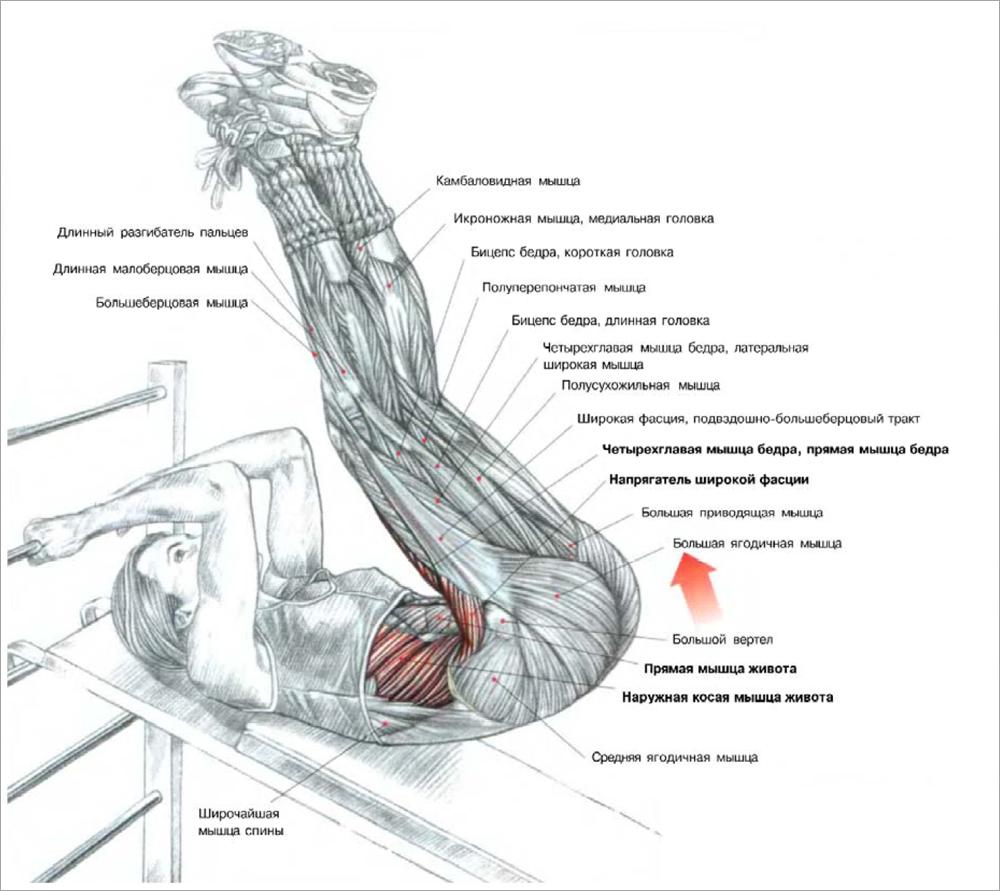 Анатомические аспекты понимаем свой организм