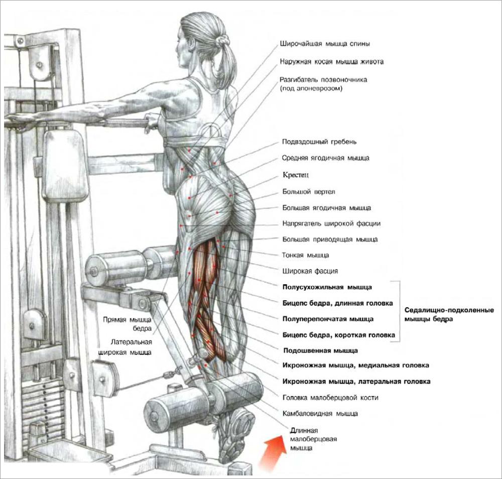 Как накачать ноги в домашних условиях - 5 упражнений